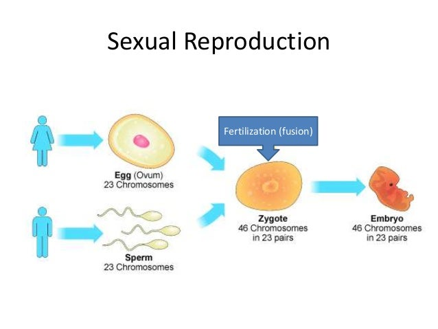 Sexually reproduction
