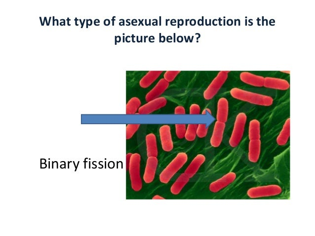 Asexual reproduction vegetative propagation ppt viewer