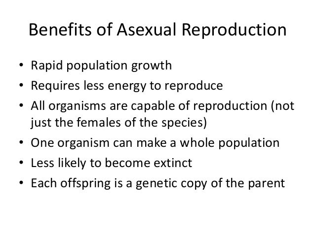 Asexual reproduction advantages to species