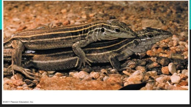 Asexual propagation types of lizards