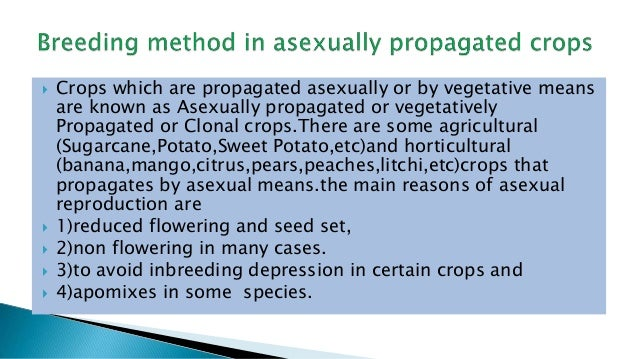 Breeding asexually propagated crops