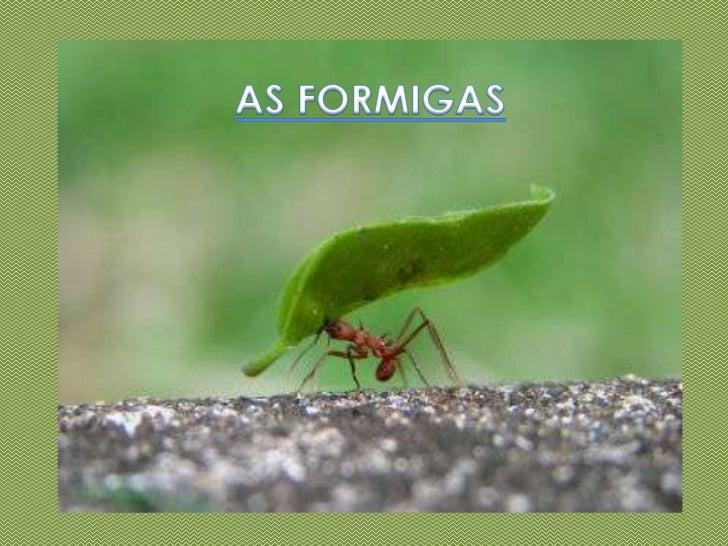 AS FORMIGAS<br />
