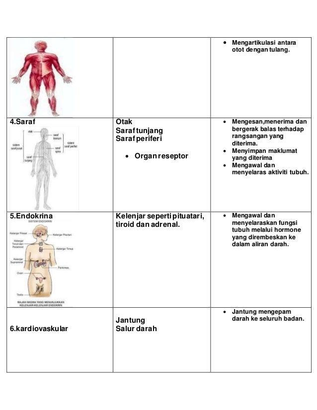  Kelenjar prostat  Uretra (b)Perempuan  Ovary  Tiub faliopio  Uterus  vagina Sumber: Marieb,N.M.(1997),Essentials of...