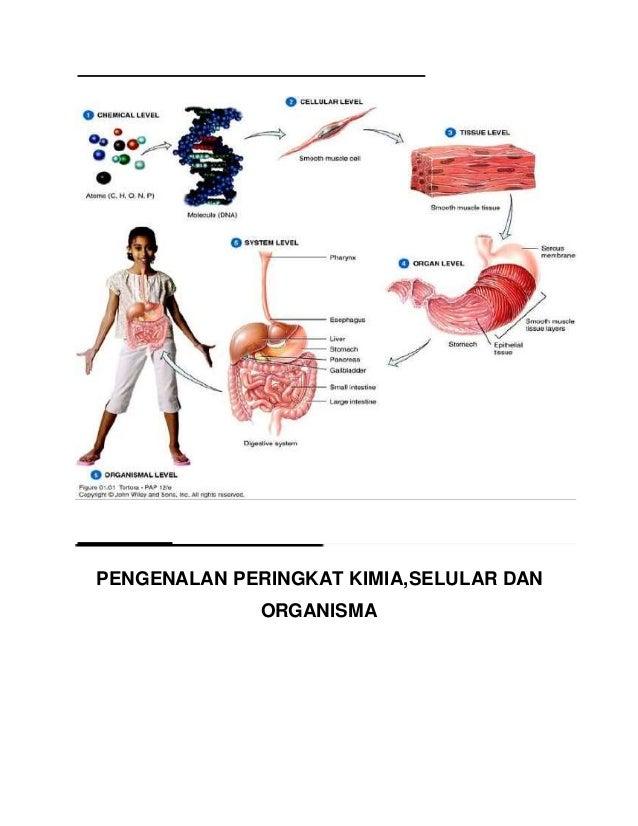  Badan manusia melalui sistem saraf dan sistem endokrina (hormon danenzim) akan mengembalikan badan ke keadaan normal mel...