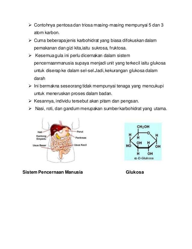 Protein  Protein adalah sumber yangpenting dalam membinaotot-otot badan.  Ia adalahunsuryang pentingsemasapertumbuhan da...