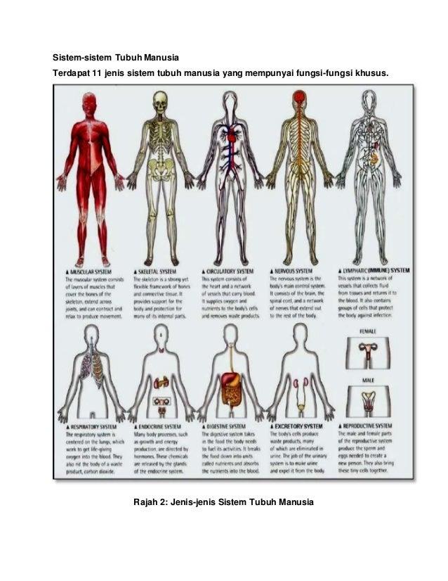 Sistem-sistem Tubuh Manusia Terdapat 11 jenis sistem tubuh manusia yang mempunyai fungsi-fungsi khusus. Rajah 2: Jenis-jen...