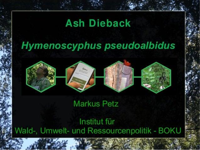 Ash Dieback Hymenoscyphus pseudoalbidus Markus Petz Institut für Wald-, Umwelt- und Ressourcenpolitik - BOKU