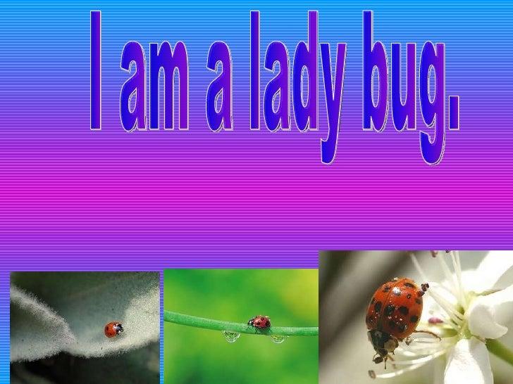 I am a lady bug.