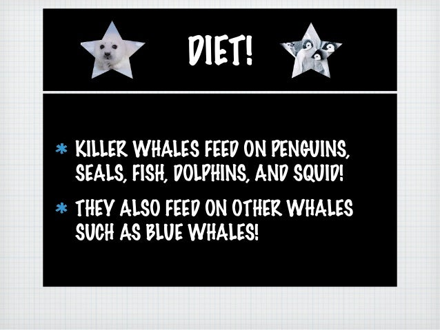Ashleigh and sarah 39 s killer whale for Feed and grow fish free no download