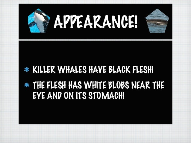 Ashleigh and Sarah's: Killer Whales Slide 2