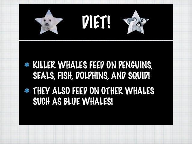 Ashleigh and Sarah's: Killer Whales Slide 3