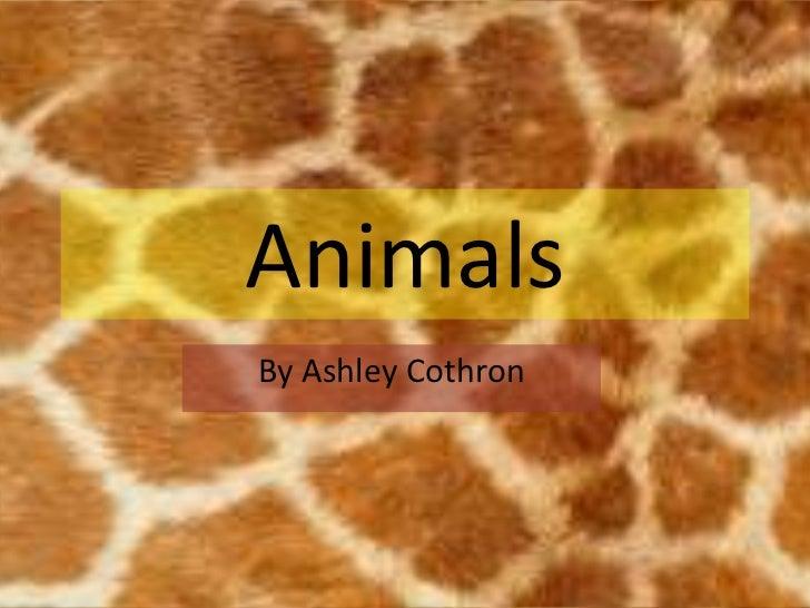 AnimalsBy Ashley Cothron