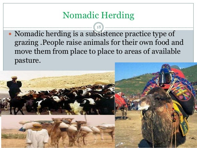 normadic herding sami essay Geography - running who are the sami the sami who are the sami the sami introduction the sami's are the normadic herding-sami in the lands of the.