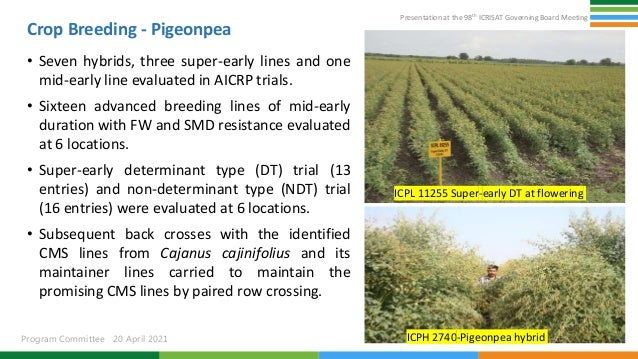 Presentation at the 98th ICRISAT Governing Board Meeting Program Committee 20 April 2021 Crop Breeding - Pigeonpea • Seven...