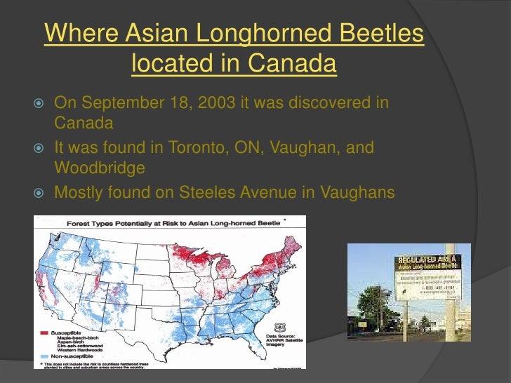 Asian Longhorned Beetle - Map of asian longhorned beetle us