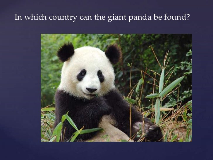 In which country can the giant panda be found?