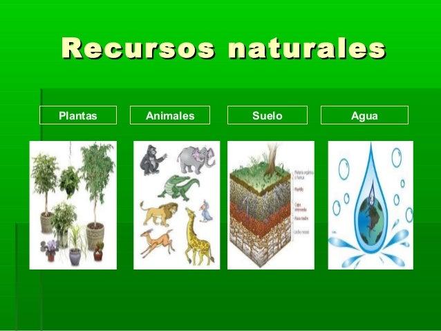 Recursos naturales tipos y proteccion for Recurso clausula suelo