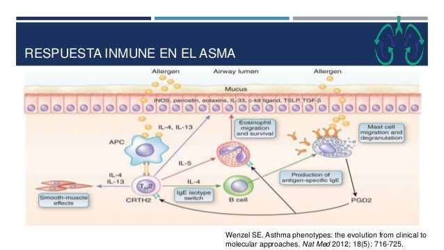 RESPUESTA INMUNE EN EL ASMA Wenzel SE. Asthma phenotypes: the evolution from clinical to molecular approaches. Nat Med 201...