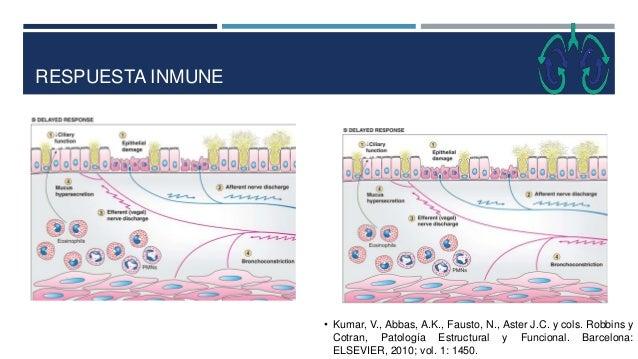 RESPUESTA INMUNE • Kumar, V., Abbas, A.K., Fausto, N., Aster J.C. y cols. Robbins y Cotran, Patología Estructural y Funcio...