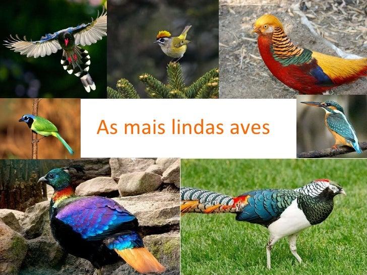 As mais lindas aves