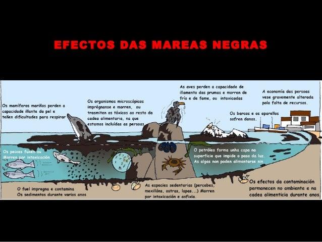 O mar en Galicia115. 000 empregos8.400 embarcacións3527 bateas900 empresas28.000 mariñeiros...