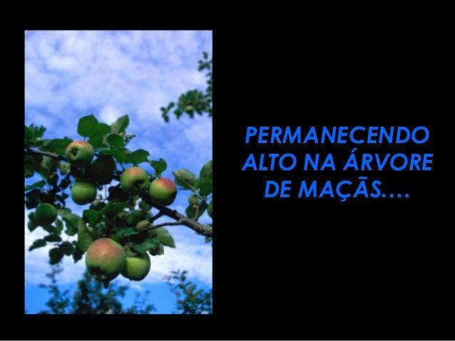 PERMANECENDOPERMANECENDO ALTO NA ÁRVOREALTO NA ÁRVORE DE MAÇÃS.…DE MAÇÃS.…