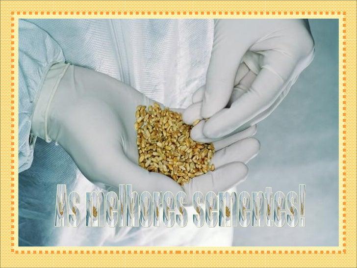 As melhores sementes!