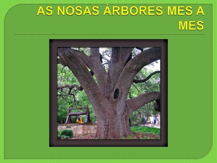 AS NOSAS ÁRBORES MES A MES<br />