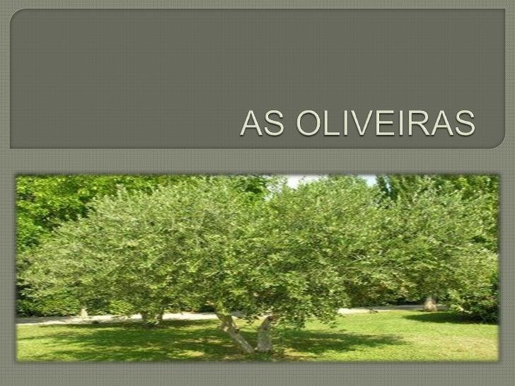 A  oliveira é a árvore que dá azeitonas; É uma arvore baixa, em termos de tronco;