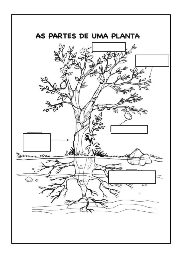 ATIVIDADES 1) Observe a planta e numere suas partes: 2) Relacione: Plantas Aquáticas Vivem fixas no solo. Plantas Terrestr...
