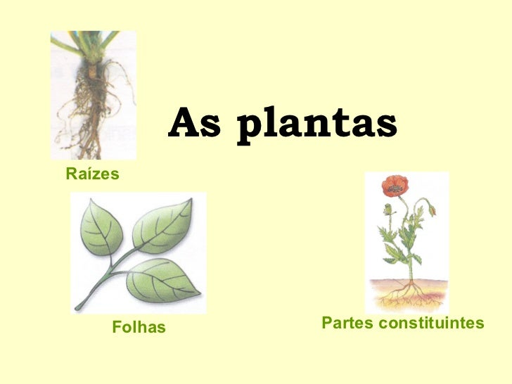 As plantas Folhas Partes constituintes Raízes