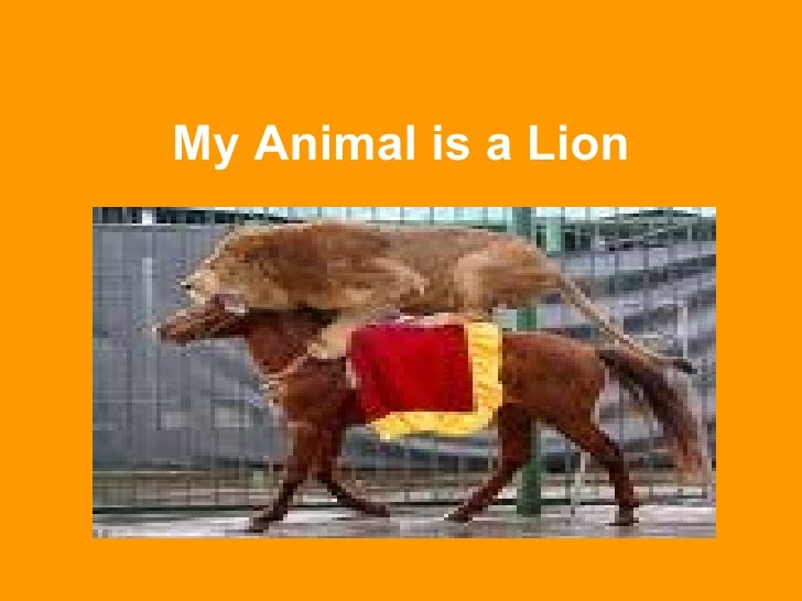 My Animal is a Lion