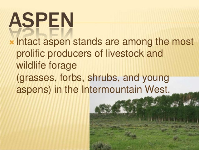 ASPEN  Intact  aspen stands are among the most prolific producers of livestock and wildlife forage (grasses, forbs, shrub...