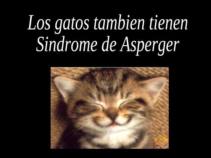 Los gatos tambien tienen Sindrome de Asperger