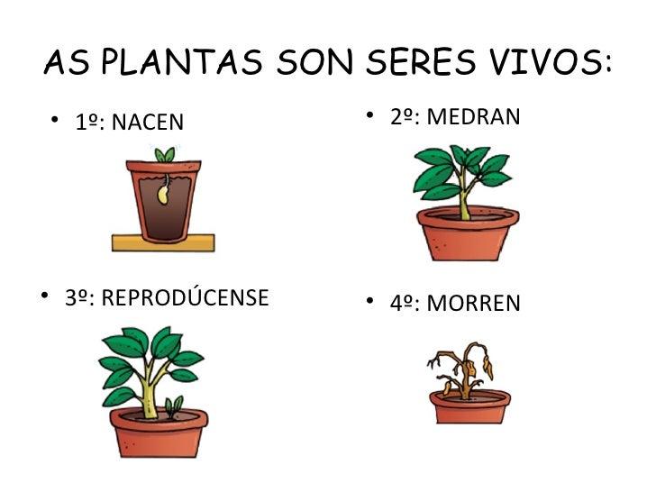 AS PLANTAS SON SERES VIVOS:• 1º: NACEN          • 2º: MEDRAN• 3º: REPRODÚCENSE   • 4º: MORREN