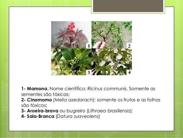 As plantas imagens de diferentes tipos de plantas for Diferentes tipos de viveros