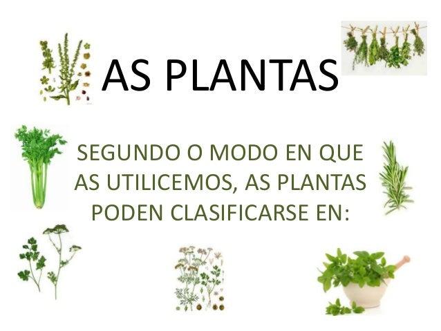 AS PLANTAS SEGUNDO O MODO EN QUE AS UTILICEMOS, AS PLANTAS PODEN CLASIFICARSE EN: