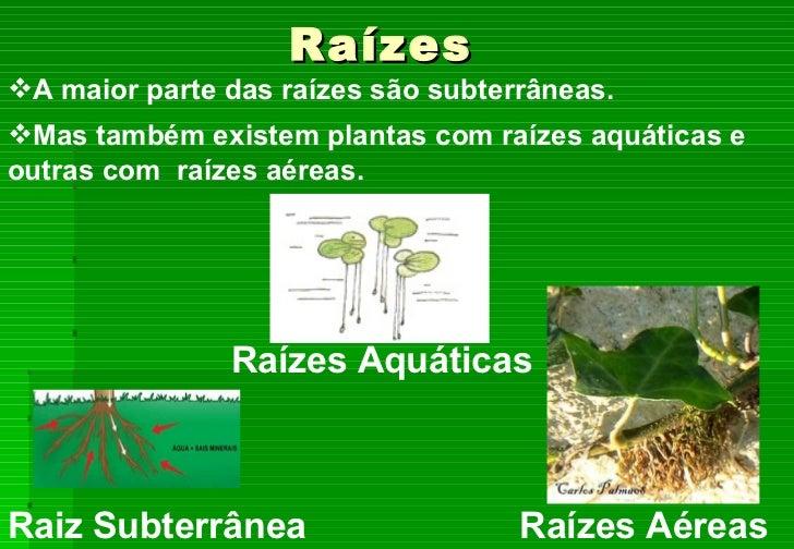 As plantas utilidade