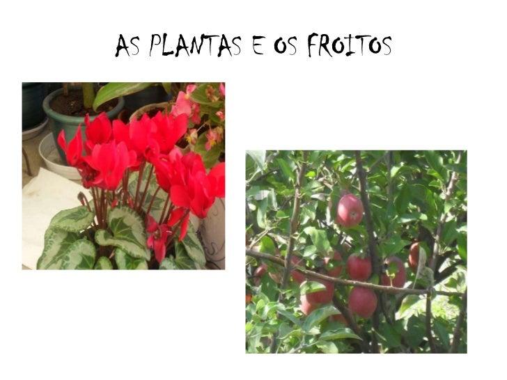 AS PLANTAS E OS FROITOS