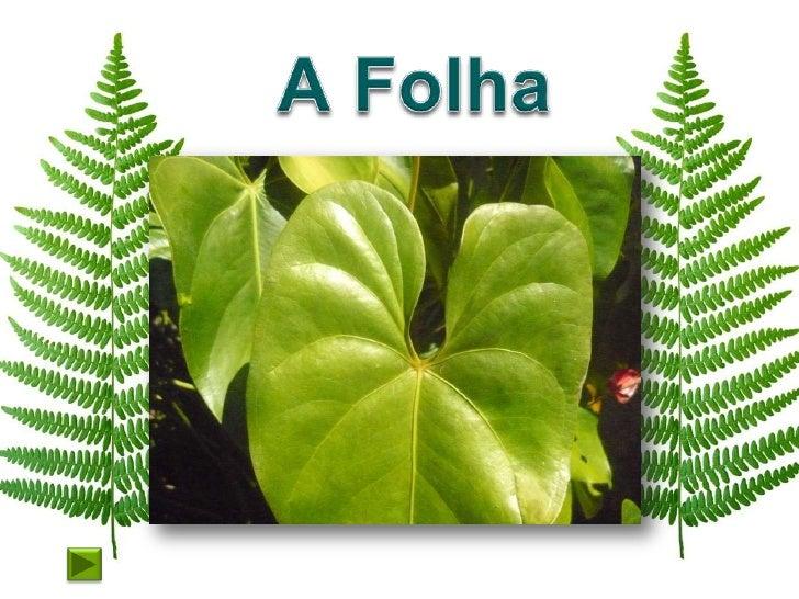 Funções da folha     Captam a energia luminosa necessária     ao fabrico dos     folha  alimentos. Permite     também que ...