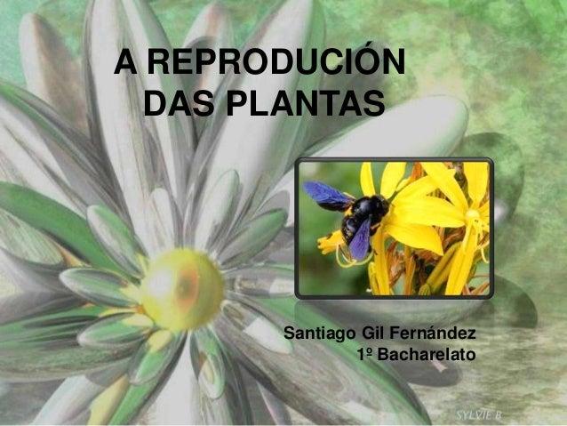 A REPRODUCIÓN DAS PLANTAS Santiago Gil Fernández 1º Bacharelato
