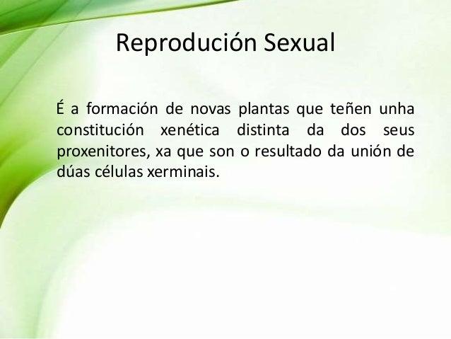 Reprodución Sexual É a formación de novas plantas que teñen unha constitución xenética distinta da dos seus proxenitores, ...