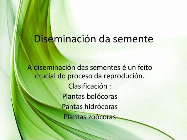 Diseminación da semente A diseminación das sementes é un feito crucial do proceso da reprodución. Clasificación : Plantas ...