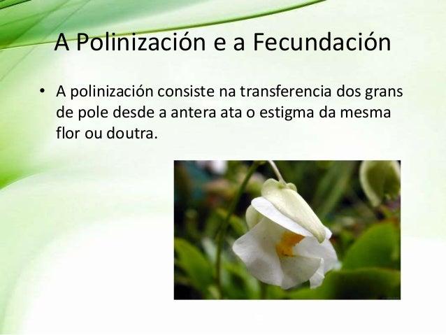 A Polinización e a Fecundación • A polinización consiste na transferencia dos grans de pole desde a antera ata o estigma d...