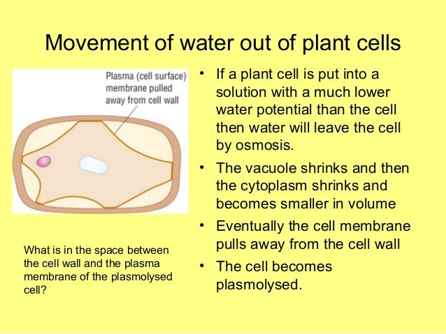 the pathways of plant water movement Transpiration - water movement through plants define transpiration and explain why it occurs in plants follow the pathway that water takes through plants from.