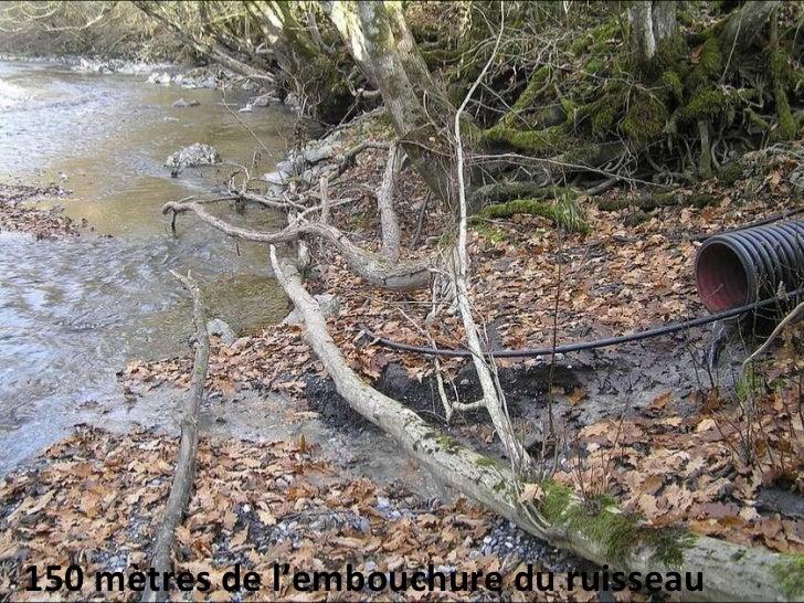 150 mètres de l'embouchure du ruisseau
