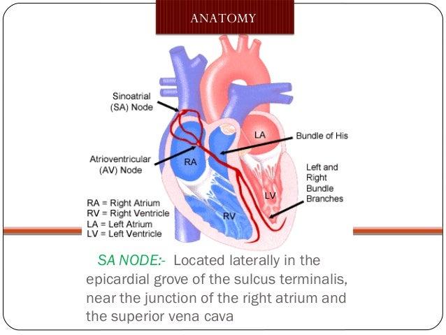 Assessment Of Sa Node And Av Node Dri Tammi Raju