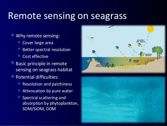 Remote sensing on seagrass Why remote sensing:  Cover large area  Better spectral resolution  Cost effective Basic pr...