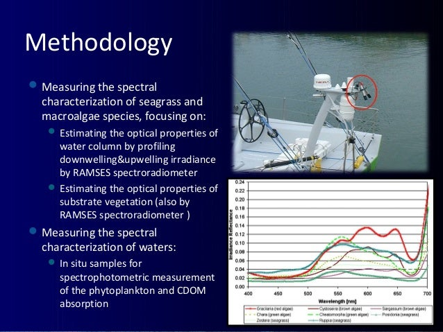 Methodology Measuring the spectral characterization of seagrass and macroalgae species, focusing on:  Estimating the opt...