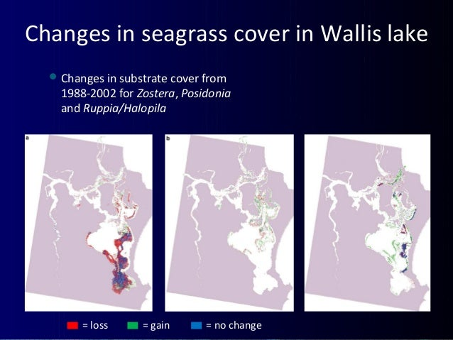 Changes in seagrass cover in Wallis lake Changes in substrate cover from 1988-2002 for Zostera, Posidonia and Ruppia/Halo...